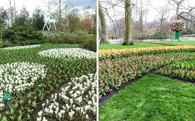in bloom the beautiful keukenhof flower gardens near amsterdam