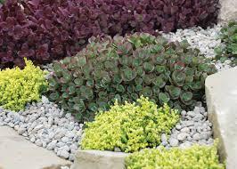 Vertical Garden Blanket Glorious Ground Covers Wisconsin Gardening