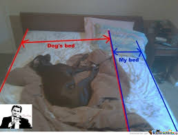 Dog In Bed Meme - my dog bed by pr meme center