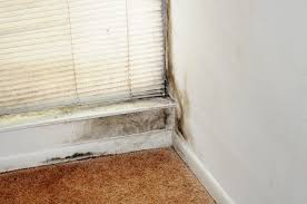 How To Stop Mold In Basement by 8 Signs Of Black Mold Toxicity U0026 How To Detox Fast David