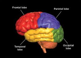 Part Of Brain That Controls Arousal A Tour Of The Brain