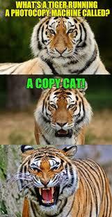 Meme Puns - tiger puns imgflip