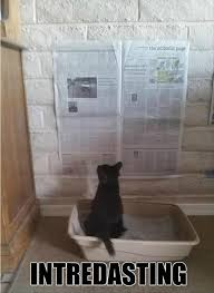 Newspaper Cat Meme - i can has cheezburger newspaper funny internet cats cat memes