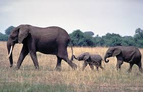 elephant family structure xcar car rentals
