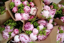 peonies flower delivery peony flower care and facts kristywicks