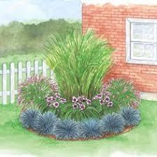 includes 1 zebra grass 2 rose fountain grass 3 macbeth