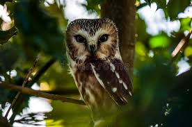 small owl in tree stock photo image 58143939