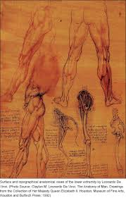 He Made Accurate Drawings Of The Human Anatomy Medical Illustration Art In Medical Education Hajar R Heart Views
