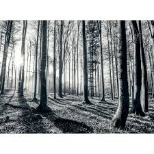 Forest Mural by 1wall Black And White Forest Trees Mural Wallpaper 315cm X 232cm