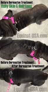 Dog Hair Loss On Back The 78 Best Images About Dogs With Seasonal Allergies Drug Free