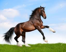 mustang horse running horses running stock photos royalty free horses running images