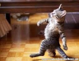 Gato Meme - meme de gato caminando imagenes memes generadormemes