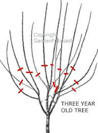 pruning trees lawn n garden ideas