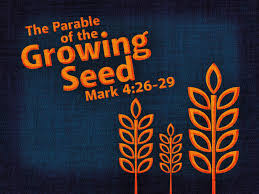reformed baptist blog parable of the growing seed mark 4 26 29