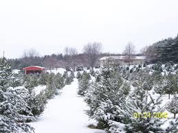 christmas christmas tree farm royalty free stock photos image
