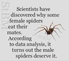 23 Funny Spider Memes Weneedfun - 383 best laugh images on pinterest politics channel and laughing