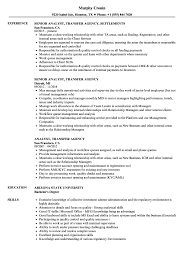 sle of resume analyst transfer agency resume sles velvet
