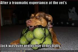 Dog At Vet Meme - i has a hotdog neutered funny dog pictures dog memes puppy