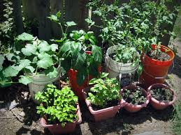 the amazing of outdoor vegetable garden cultivated by many leeks