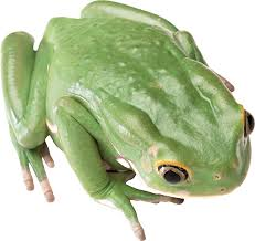 frog png image free download image frogs