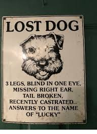 Lost Dog Meme - lost dog 3 legs blind in one eye missing right ear tail broken