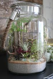 indoor terrarium garden lia griffith