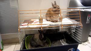 Rabbit Beds Bunny Bunk Beds Youtube