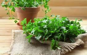 Indoor Herb Garden Light 6 Absolute Easiest Herbs To Grow Indoors Rodale U0027s Organic Life