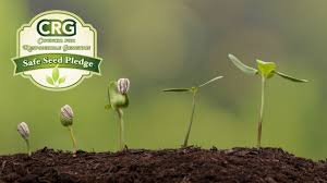 how to grow mushrooms indoors organic gardening blog