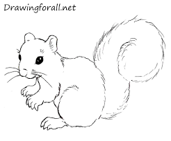 coloring pages luxury squirrel drawing thumb coloring pages