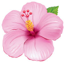image pink exotic flower png clipart picture png animal jam