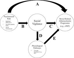 evaluating the longitudinal risk of social vigilance on