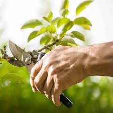 professional tree pruning greenville and simpsonville