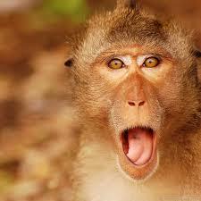 Monkey Meme Generator - meme maker surprise monkey generator