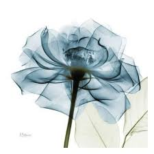 blue flower blue flower blossom color photography posters at allposters