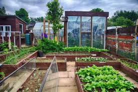 4 tips to organizing your backyard with a greenhouse ground report