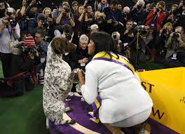 thanksgiving day dog show 140th westminster kennel club dog show la times