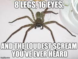 Huge Spider Memes Image Memes - image tagged in huge spider imgflip