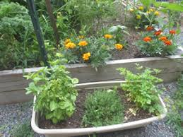 What Are The Gardening Zones - common questions of first time gardeners nj gardening tips