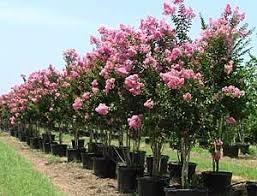 athens tree farm athens sod company