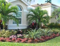 Florida Garden Ideas Top 20 So Florida Perennial Looks Like Golden Mound But This