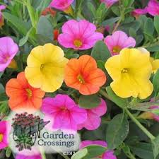 Plant Combination Ideas For Container Gardens - 68 best container combinations images on pinterest container