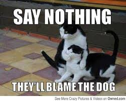Funny Raccoon Meme - this cat knows what he s talking about cats pinterest funny