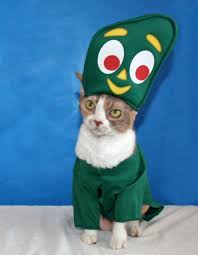Halloween Costumes Cat 25 Cat Halloween Costumes Images Animals Cats