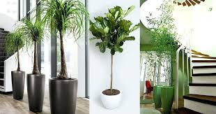 low light indoor trees low light indoor trees low light houseplants trees best large indoor