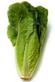 organic vegetable garden seeds romaine lettuce allen sterling