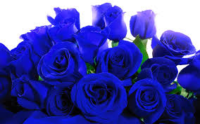 blue roses image blue roses jpg the originals fanfiction wiki fandom