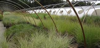 selection of ornamental grasses at lp statile wholesale