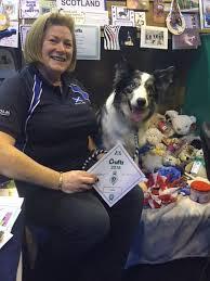 australian shepherd crufts 2016 east kilbride dog training club have a successful year at crufts