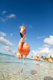 iguana island aruba the island of flamingos and iguanas we are travel girls